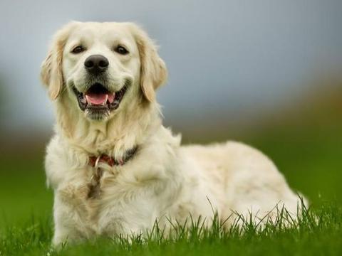 """10狗9苦:以下4个年份出生的属狗人天生""""皇帝命"""",看看你家有吗"""
