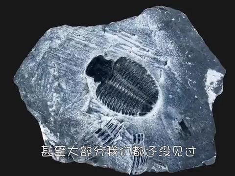 """工地挖出""""巨型生物"""",形状怪异像角一样,长度竟达2米!"""