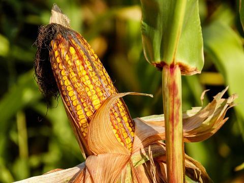 东北农作物大面积倒伏受损25亿?农业生产啥时候能不靠天吃饭?