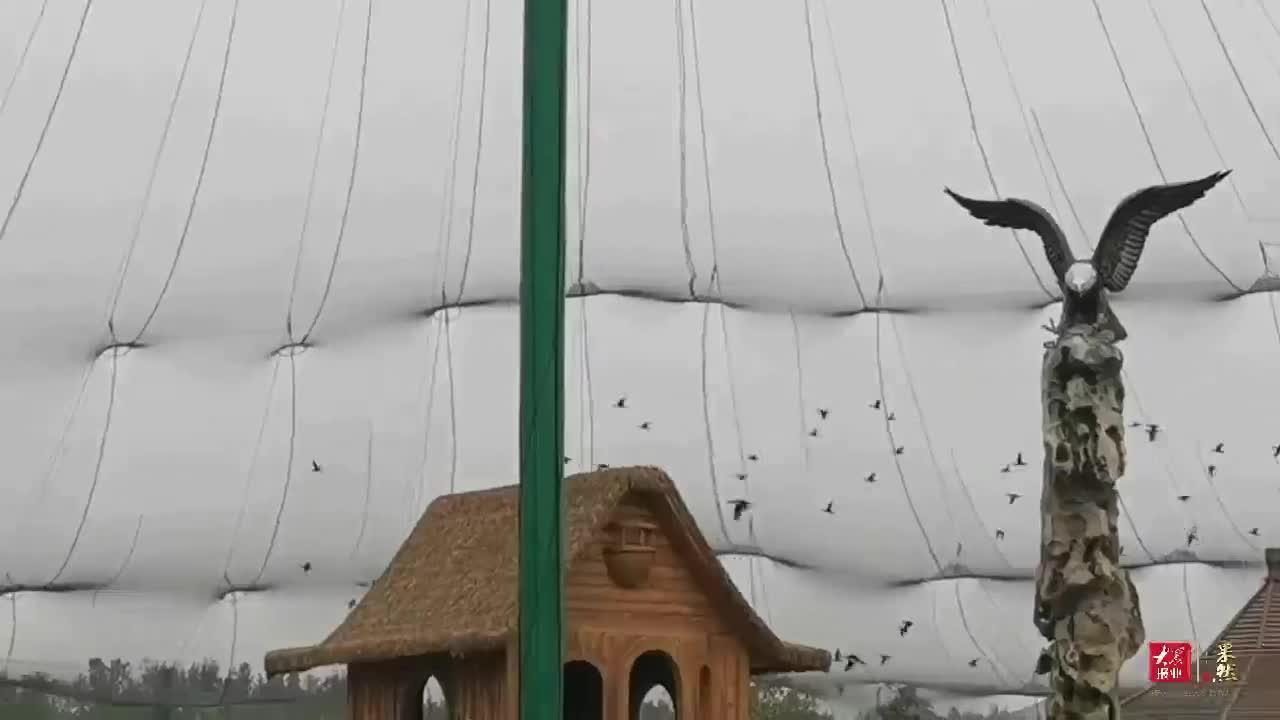 果然视频丨齐河泉城欧乐堡动物王国正式开园,万只野生动物好欢乐