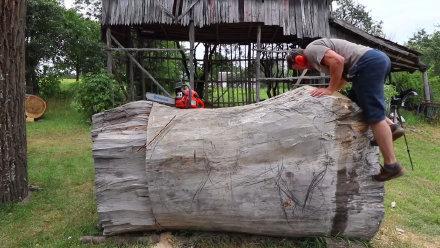 这是个高手,那么大一块木头,看他如何雕刻成灰熊