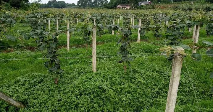 朴素的思维:如何管理好自己的果园