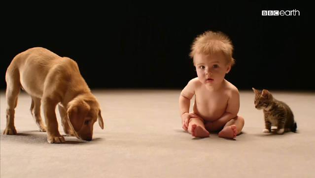 BBC高分纪录片《婴儿的秘密生活》 采用最新的专业摄影技术……
