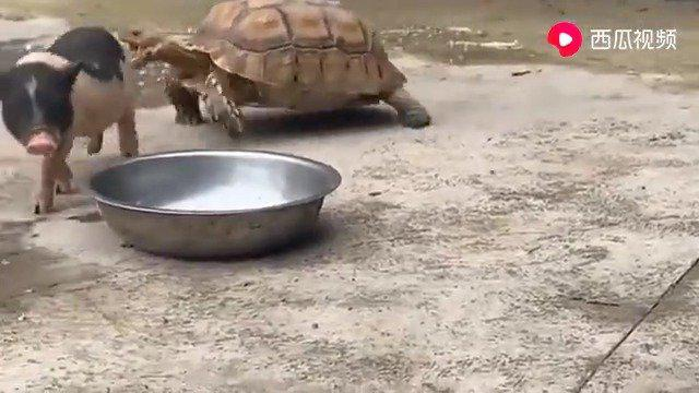 逗死了…谁说龟跑的慢啊