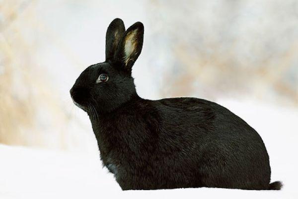 75岁大师说了:生肖兔10月中要大福降临,接住往后就是大富大贵!