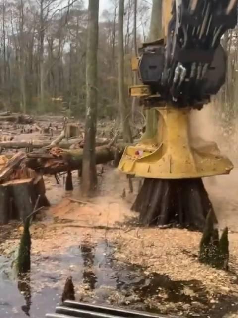 机械自动化伐木