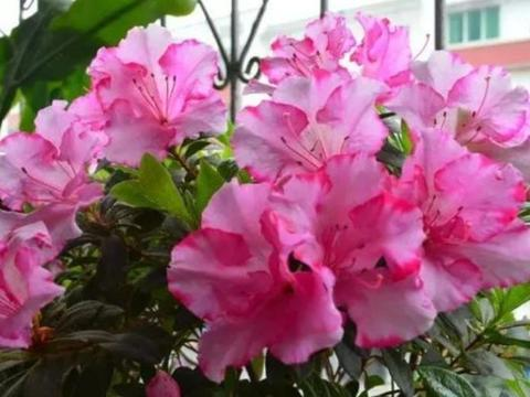 家里养这几款植物,娇小不占地,美不胜收,一年四季都赏花