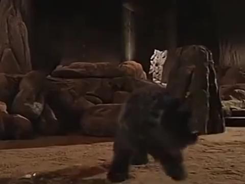 杨戬吃下了申公豹的金丹,神眼发挥功效,厉害