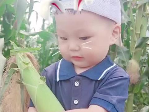 我家楼下的玉米地,他看了好久了,终于熟了,趁着太阳大没人