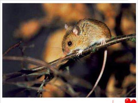 如果老鼠在地球上灭绝, 接下来会发生什么? 看完涨知识了