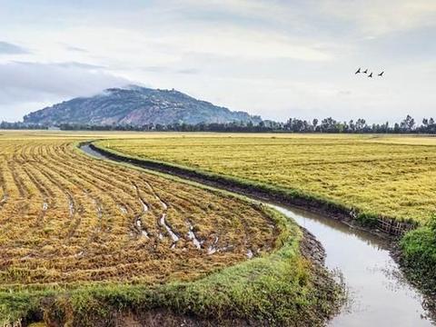 生物质炭施用对不同深度稻田土壤有机碳矿化的影响