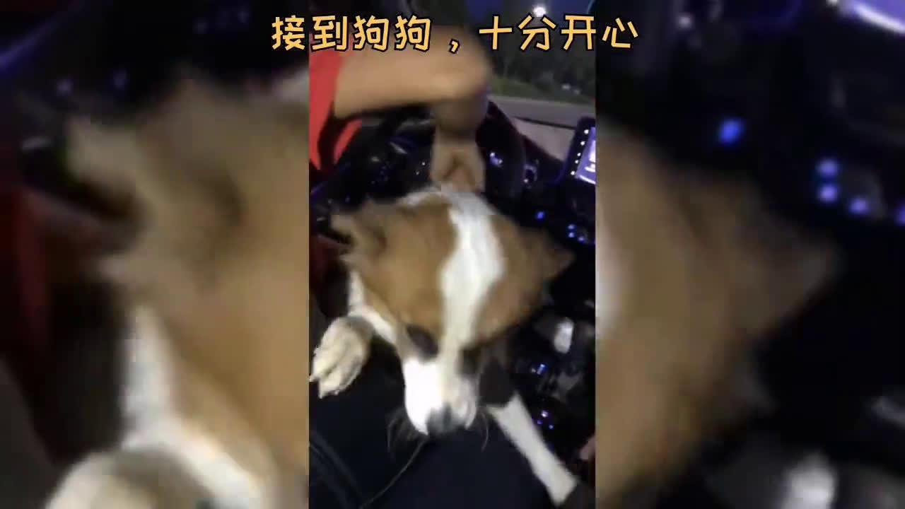 集中收容65只流浪狗!汕头爱猫者协会呼吁爱心人士前来领养