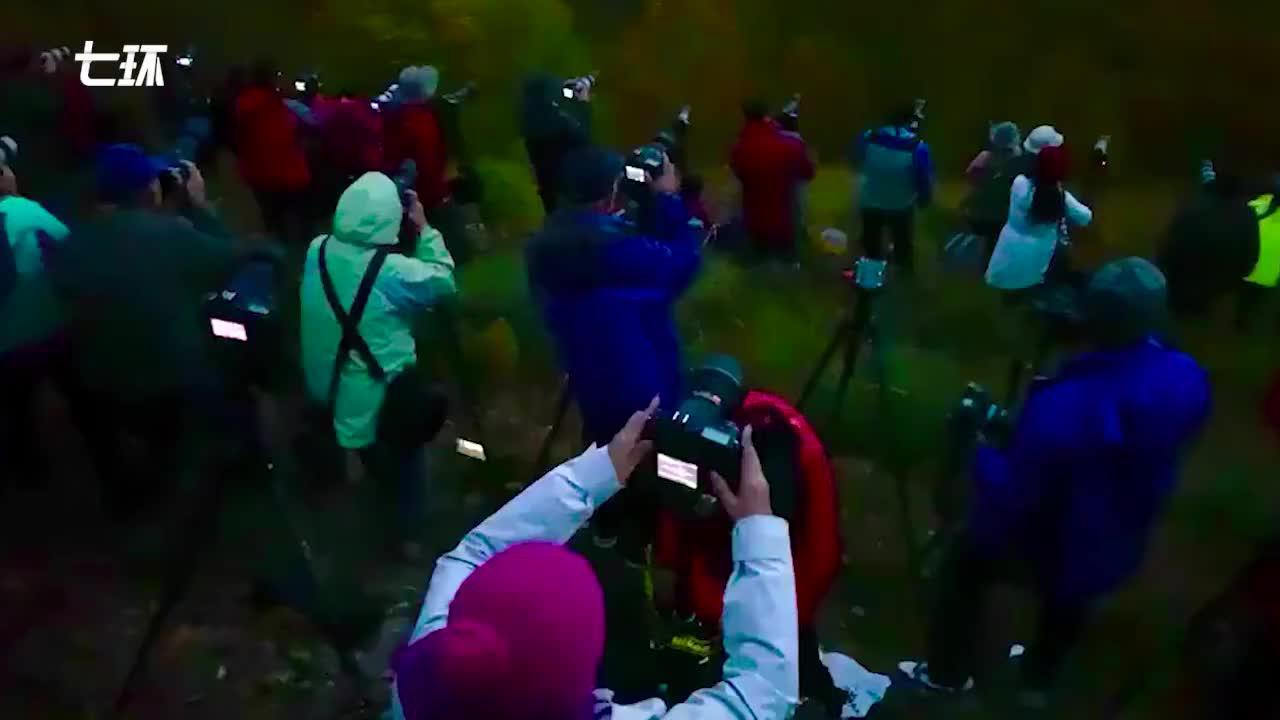 数百名摄影爱好者围拍乌兰布统秋色,有人凌晨起床占位