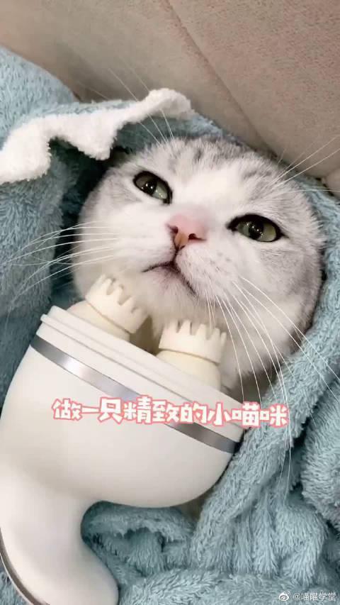 精致的小猫咪睡前都要做个脸部spa……