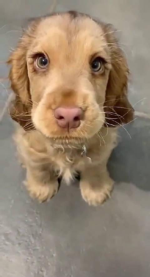 妈耶!!这是动画片里的狗狗吧,太可爱了!!