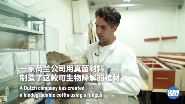 荷兰发明真菌棺材 提高降解速度