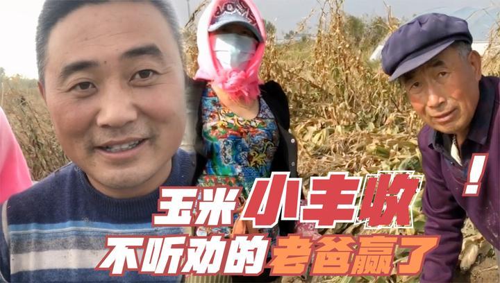 农民王小:老爸坚持自己收地,3口人玉米地忙干活,秋收的小喜悦