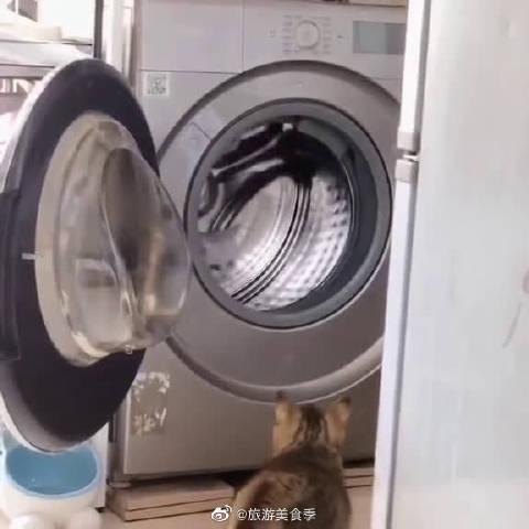 原来这才是养猫家里滚筒洗衣机的正确用法!