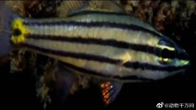 你是鱼精吧?怪鱼不光会走路还会钓鱼