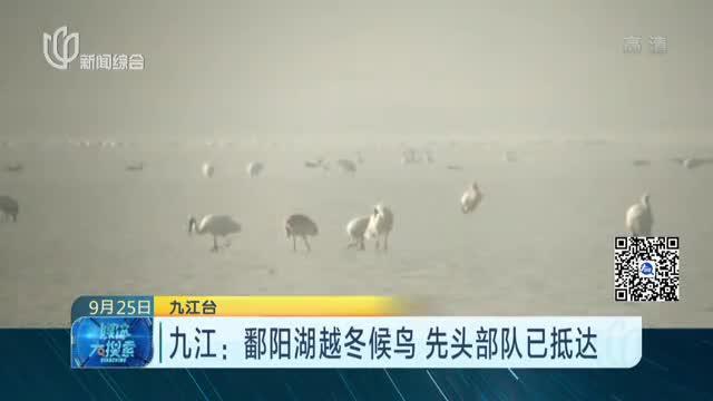 九江:鄱阳湖越冬候鸟  先头部队已抵达