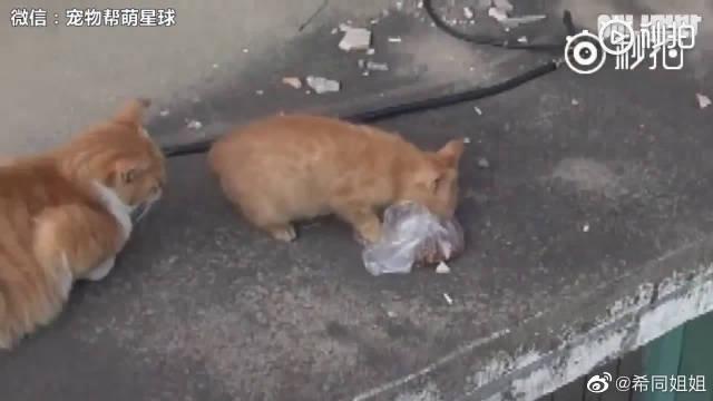 在韩国有一只流浪的橘猫,大家喂她散装的猫粮从来不吃……