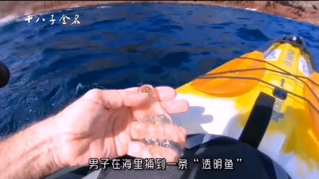 樽海鞘,深海异形竟是人类的一大救星!