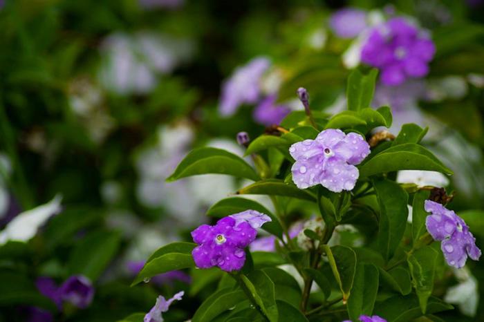 秋天能开花的花儿真不少,花丛家里都能养,颜值高花期长
