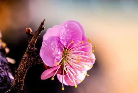 十二个月,每月送你一朵花