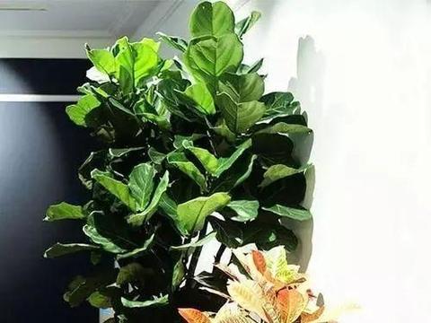 客厅摆设植物重质不重量,数量最好不超出面积的十分之一
