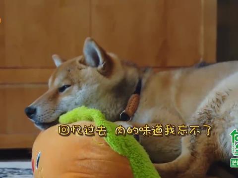 H想吃杨迪的腊肉想到抑郁,何炅:它不喝水想喝汤1