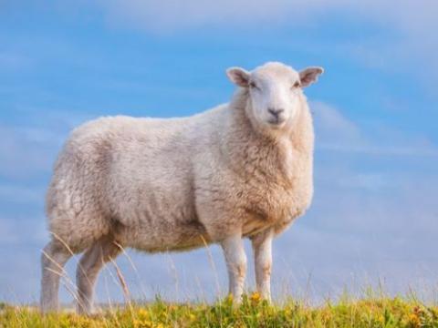 """羊羊羊羊:10月1日将有""""地动山摇""""的大新闻!家有属羊的速看!"""