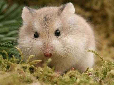 """鼠鼠鼠:10月初将有""""地动山摇""""的大新闻!家有属鼠的速看!"""