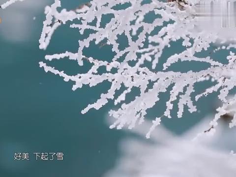 刘涛惊人拍照技术,武艺王珂被他拍出两米八气场,比节目组都专业