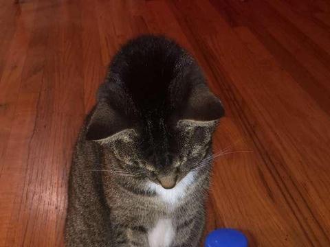 主人用喷壶阻止猫咪挠家具,没想到猫非但不怕还张嘴接水喝