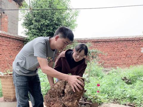 农村媳妇爱养花,老公给媳妇做了啥,媳妇看到很开心