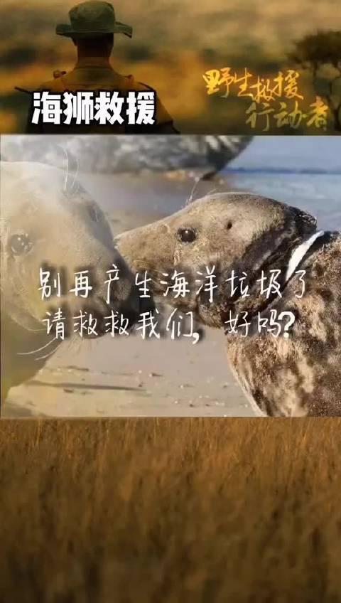 不要再产生海洋垃圾了,它们都是无辜的呀…保护动物,人人有责!