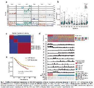 单靠全基因组测序也能发20分生信SCI