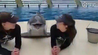 哈哈哈哈小海豚还玩上瘾了,太可爱了