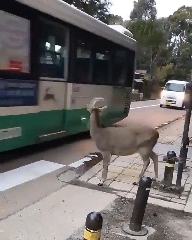 一看二慢三通过,一定要注意交通安全! video:infin