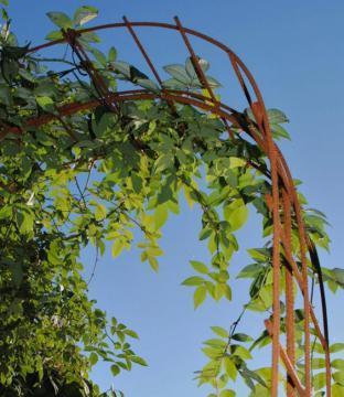 阳台不做晾晒,装个拱形铁架养花养草,茶余饭后赏景休闲才算美好