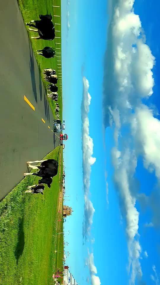 建议横屏观看! 行驶在呼伦贝尔大草原上,风吹草地见牛羊!
