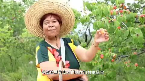 """杏儿清甜,艾草飘香!这个""""华北杏花村""""就在延庆!"""