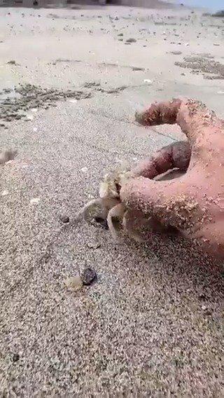 那是因为没有把螃蟹放到跑道上
