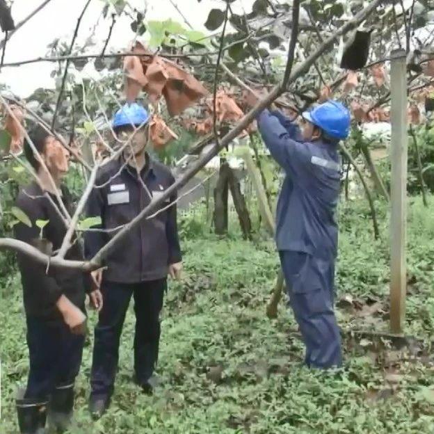 六盘水供电局:组建党员服务队 助农脱贫奔小康