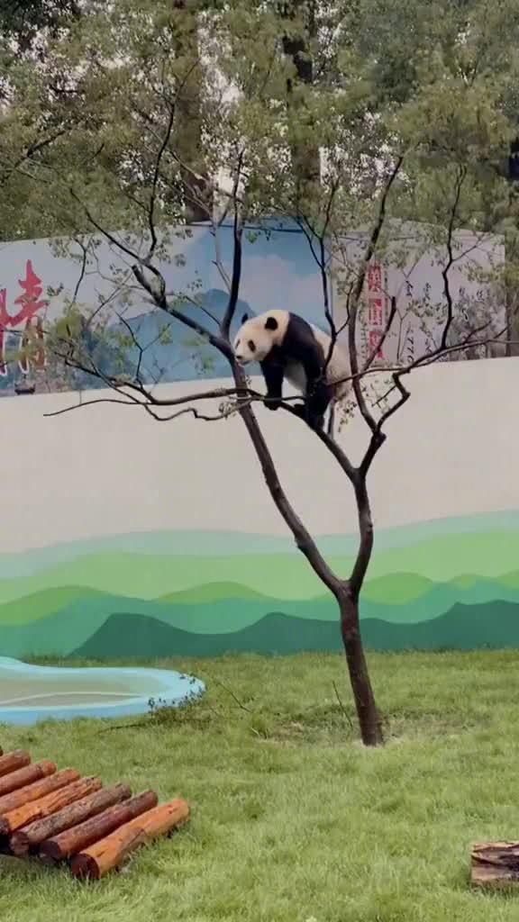 熊猫🐼:怎么样,票没白买吧?