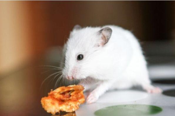 生肖鼠:今年谁是你的贵人,谁又是你的小人,属鼠的看看吧
