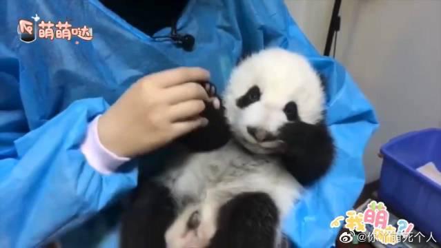 萌翻了!看下奶爸奶妈们与熊猫宝宝的有爱瞬间,好有爱啊