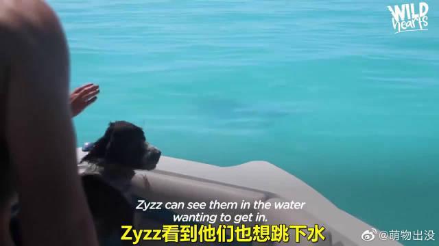 加勒比海地区有只海豚Jojo,对人类充满了好奇心