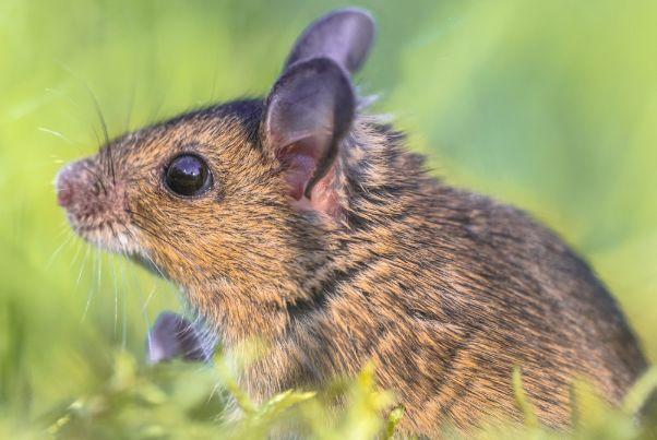 72年生肖鼠的毕生寿命,过了48岁后什么命?句句说到心坎里