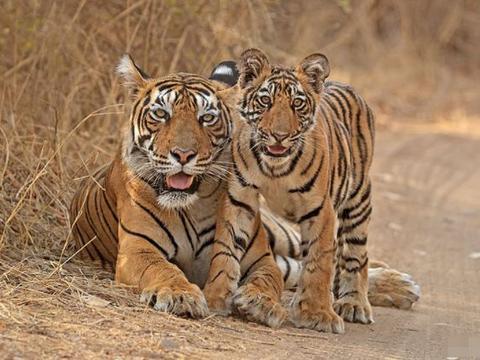 生肖虎:谁是你的贵人,谁又是你的小人,属虎的来看看吧!